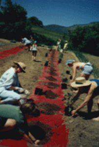 Organic Farm Internship